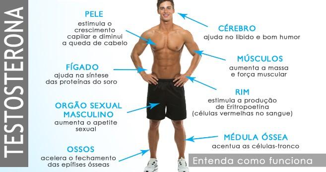 Como a testosterona age nos organismo